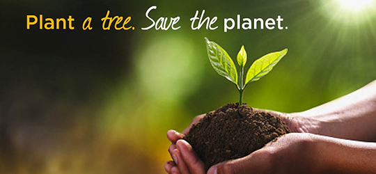 planting and saving trees slogans